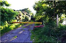 O0624 : Access road at end of Horans Lane, Killinarden near Dublin by P L Chadwick