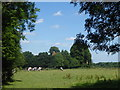 TQ3759 : Farleigh Church seen from Greatpark Wood by Marathon