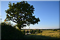 SS7601 : Mid Devon : Countryside Scenery by Lewis Clarke