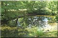 SO8744 : Backwater of lake at Croome by Derek Harper