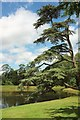 SO8744 : Cedar by the lake, Croome by Derek Harper