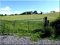 H6156 : Grass field, Tullybryan by Kenneth  Allen