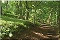 SO9640 : Wychavon Way in Long Plantation by Derek Harper