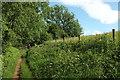 SO9639 : Wychavon Way beside Long Plantation #2 by Derek Harper