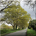 SP2374 : Spring comes to Table Oak Lane, Honiley by Robin Stott