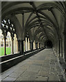 TG2308 : Norwich Cathedral Cloister by John Sutton