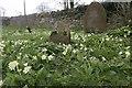 SU5499 : Primroses Around the Grave by Bill Nicholls