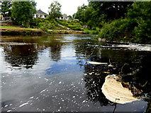 H4772 : Captured froth, Camowen River by Kenneth  Allen