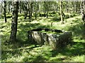 SK2479 : Stone trough in silver birch woodland by Neil Theasby