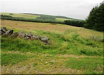 NO2206 : Path to woods, Lomond Hills by Bill Kasman