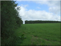 SW6923 : Grazing and hedgerow off the A3083 by JThomas