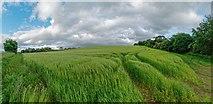 NH5757 : Barley Field - Teandore by valenta