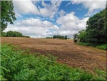 NH5857 : Field Margin Drummondreach Wood by valenta