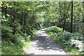 SH7225 : Path and Bike Trail in Coed-y-Brenin by Jeff Buck