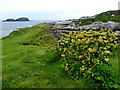 D0345 : View from Ballintoy by Kenneth  Allen