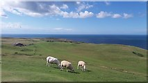 SH7683 : Great Orme ... Y Gogarth, Conwy by I Love Colour