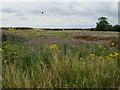 TL4461 : To be Darwin Green development by Hugh Venables