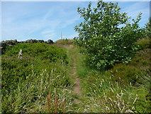 SE0028 : Wadsworth FP58, Chiserley by Humphrey Bolton