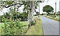 J3288 : The Irish Hill Road, Little Ballymena, near Ballyclare (July 2017) by Albert Bridge