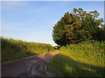 X0981 : Farm track near Ardsallagh by Jonathan Thacker