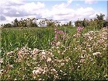 TM4599 : Wild flowers beside the footpath by Evelyn Simak