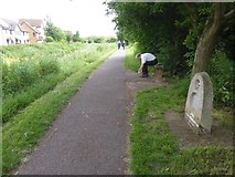 ST2426 : Canal towpath opposite Maidenbrook, passing Neptune by David Smith