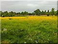 SE6756 : Breezy Knees Gardens by Ian Capper