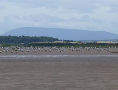 NU0645 : Gulls on the beach at Goswick by Russel Wills