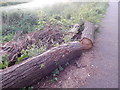 TM1444 : Willow logs at the Gipping Way by Hamish Griffin