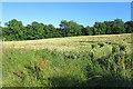 NT1267 : Field near Easter Newton by Anne Burgess