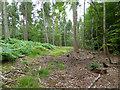 SU9493 : In Great Beard's Wood by Robin Webster
