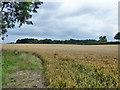 SU9393 : Wheat field north of Sandels Wood by Robin Webster
