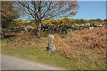 SX7473 : Standing stone, Rushlade Common by Derek Harper