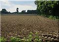 TG3315 : Maize field by Hugh Venables