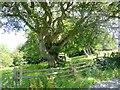 NY9457 : Treehouse at Dukesfield Hall by Oliver Dixon