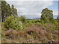 NH4937 : Trigpoint, Glaodhaich by Craig Wallace