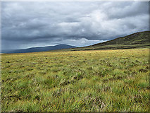 S2617 : Rough Heathland by kevin higgins