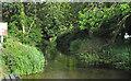 TM3590 : Waveney Channel near Wainford Mill by Roger Jones