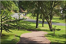 NT4227 : Path in Bowhill Estate by Jim Barton