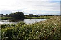 NT4681 : Marl Loch, Aberlady Bay by Mike Pennington
