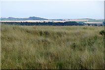 NT4681 : Looking SE in the dunes at Aberlady Bay by Mike Pennington