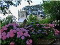 SX0771 : Hydrangeas at the edge of St Helena Churchyard in Helland by Rod Allday