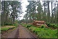 NJ8117 : Logging at Balbithan Wood by Alan Reid