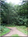TL4300 : Track junction in Epping Forest by JThomas