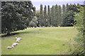 SP3065 : Sheep at Jephson's Farm, Myton, Warwick by Robin Stott