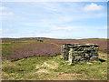 NY8857 : Grouse butt line on Eshells Moor by Trevor Littlewood