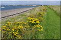 SD2363 : Piel Island by Ian Taylor