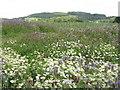 NO3810 : Leek field at Craigrothie by M J Richardson