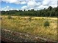 NY4254 : Durranhill Sidings by Graham Hogg