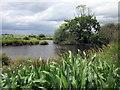SJ5361 : Pond on Tiverton Farm by Jeff Buck